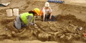 Paleontology |Sloth Fossil Recovery