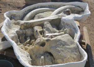 Arboleda Mammoth Skull Jacket
