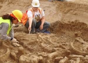 Paleontology | Sloth Fossil Recovery